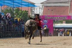 Buffalo racing , Traditional Festival. Stock Photos