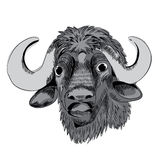 Buffalo`s head. Detail of a buffalo`s head, vector illustration on white background royalty free illustration