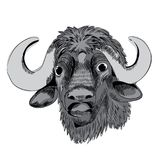 Buffalo`s head. Vector illustration on white background. Hand drawn buffalo`s head. Vector illustration on white background vector illustration