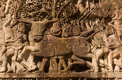 Buffalo sacrifice, Ancient Khmer sculpture, Cambod. Ancient Khmer bas relief carving of a buffalo about to be sacrificed in a religious ceremony.  Wall of Bayon Royalty Free Stock Photos