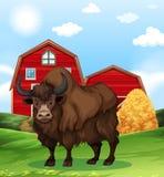 Buffalo se tenant dans la basse cour Photos libres de droits