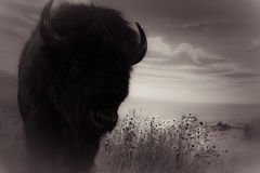 Buffalo Silhouette In A Museum Stock Images