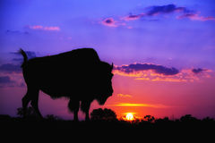 Buffalo silhouette at sunrise Royalty Free Stock Photos