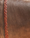 Buffalo skin background with leather braid Stock Photos