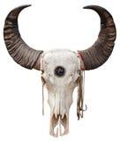 Buffalo skull Royalty Free Stock Images