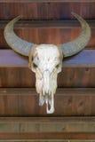 Buffalo skull royalty free stock photos