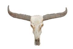 Buffalo skull on isolate. Royalty Free Stock Photos