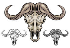 Buffalo skull isolated on white Stock Image