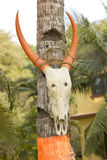Buffalo skull with long color horns �n wooden pillar, India Stock Image