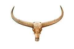 Buffalo skull with mystic symbol. Isolated on white background Stock Image