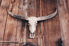 Buffalo skull Stock Image