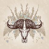 Buffalo Skull Vintage Aged Plumage Stock Images