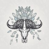 Buffalo Skull Vintage Aged Plumage Royalty Free Stock Photos