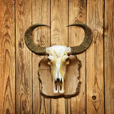 Buffalo skull on wooden wall Royalty Free Stock Image