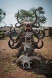 Buffalo Skulls Royalty Free Stock Image