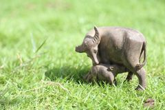 The small buffalo mother and baby at green fields on morning Stock Photos