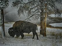 Buffalo in the snow royalty free stock photos