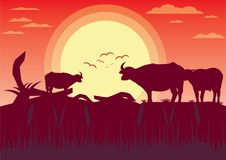 Buffalo sunset evening and grassland meadow landscape  Ill. Ustrator Royalty Free Stock Photography