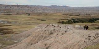 Buffalo sur l'arête en parc national de bad-lands photographie stock