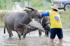Buffalo takint a bath Royalty Free Stock Image
