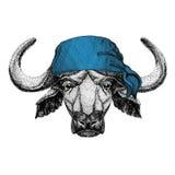 Buffalo, toro, bandana dell'animale selvatico del bue o bandana o immagine d'uso del bandanna per il pirata Seaman Sailor Biker M Fotografia Stock