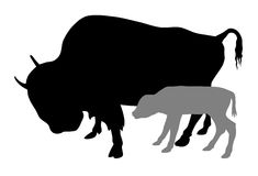 Buffalo Stock Photography