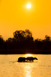 Buffalo walk in river Royalty Free Stock Images