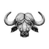 Buffalo wearing glasses Image of bison, bull, buffalo for tattoo, logo, emblem, badge design. Image of bison, bull, buffalo for tattoo, logo, emblem, badge Stock Photos