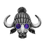 Buffalo wearing hipster glasses and knitted hat Image of bison, bull, buffalo for tattoo, logo, emblem, badge design. Image of bison, bull, buffalo for tattoo Royalty Free Stock Image