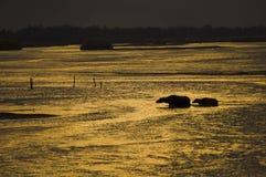 Buffalo. In Yingjiang, Yunnan, China Stock Photography