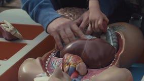 Buffed человек с маленьким ребенком собирает модель кишечника человеческого тела акции видеоматериалы