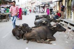 Buffel i marknad Royaltyfria Bilder