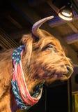 Buffel med amerikanska flaggan Arkivfoton