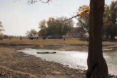 Buffel vid sjön arkivbild