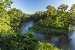 Buffelflod arkivbilder