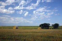 BuffelGap grässlättar, South Dakota royaltyfri foto