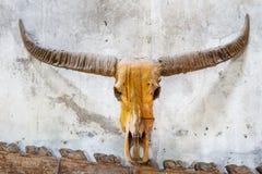 Buffelhorn med tegelstenbakgrund Royaltyfria Bilder