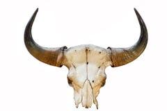 Buffelhorn på isolerad bakgrund Royaltyfri Bild