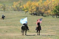 Buffelkörning, Custer, South Dakota arkivfoto