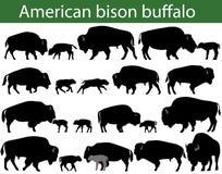 Buffelkonturer för amerikansk bison Arkivbilder