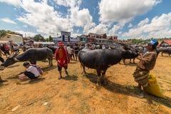 Buffelmarknad i Rantepao arkivbilder