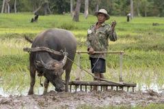 buffeln plöjer vatten royaltyfria bilder