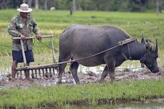 buffeln plöjer vatten Arkivfoton