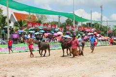 Buffels die in Buffels rennen die Festiva rennen Stock Foto's