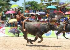 Buffels die in Buffels rennen die Festiva rennen Stock Afbeelding