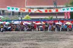 Buffels het Rennen Royalty-vrije Stock Fotografie