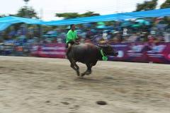 Buffels het Rennen Royalty-vrije Stock Afbeelding
