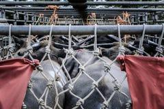 Buffels op vrachtwagens die van de veemarkt in Chiangmai werden gekocht Stock Foto