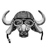Buffels, stier, van de de motorfietsvliegenier van de os Wilde dierlijke dragende fietser van de de vliegclub de helmillustratie  royalty-vrije illustratie