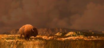 Buffels in Wyoming Royalty-vrije Stock Afbeeldingen